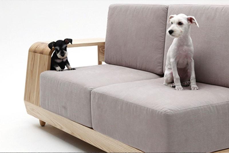 Mascotas-tecnologia-sofa