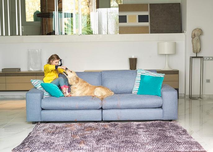 Avoir un beau canapé et un animal de compagnie, c'est possible !