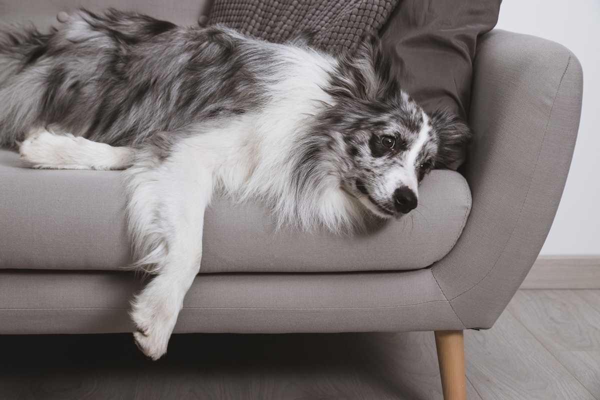 ¿Acaros? Evita las alergias con una tapicería de sofá adecuada
