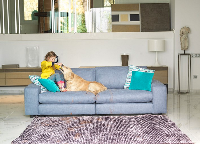 Nice couch + home pet? Yes, it is possible!