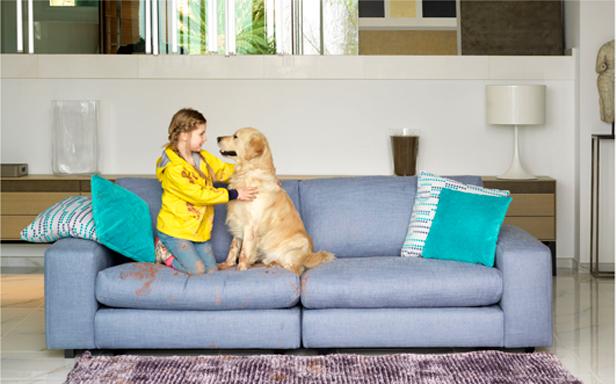 Tranquilidad también en tu hogar pet-friendly