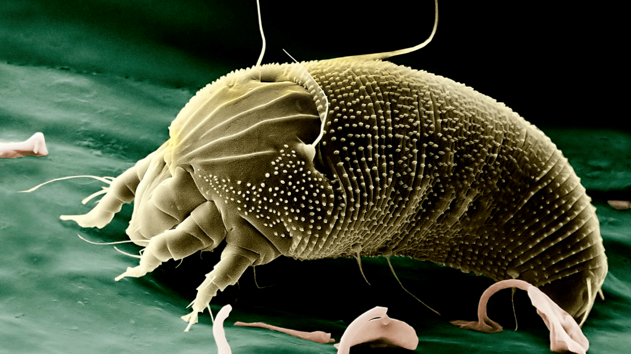 How to reduce mites in the house